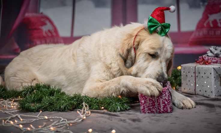 regalare cagnolino natale