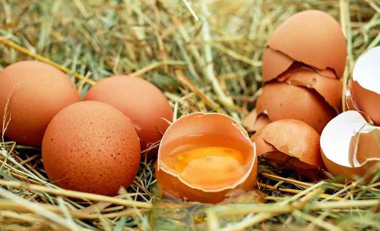 gusci delle uova