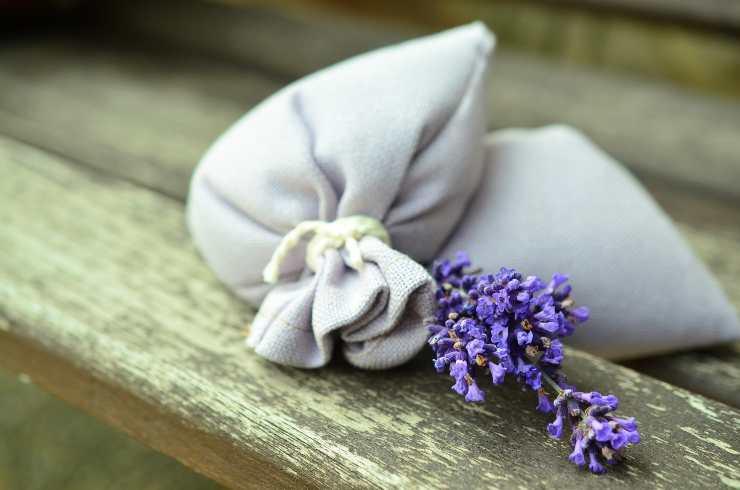fiori secchi insonnia