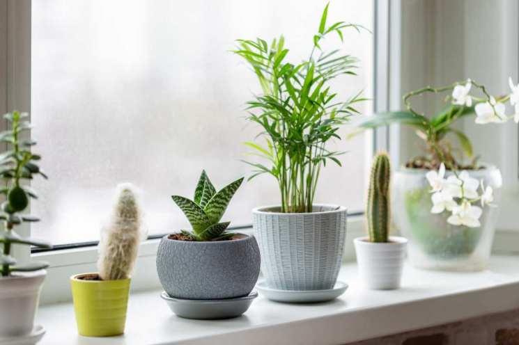 fertilizzante per piante