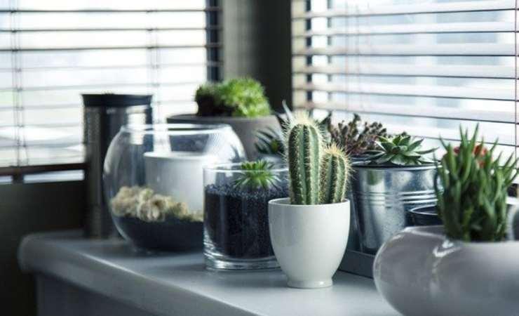 piante spente