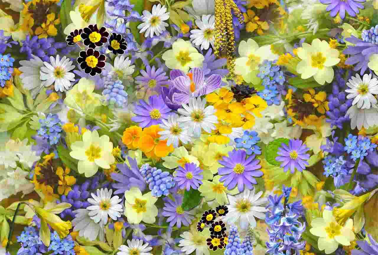 fiori primaverili balcone