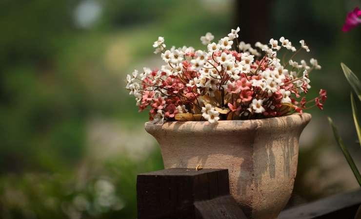 proteggere fiori freddo