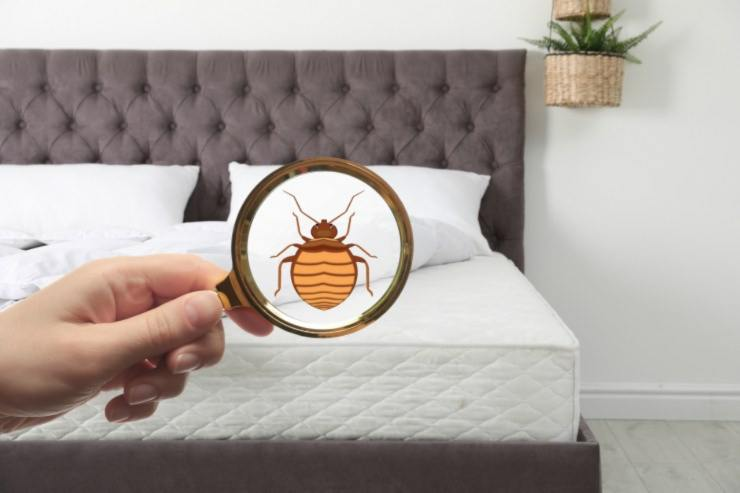 cimici da letto