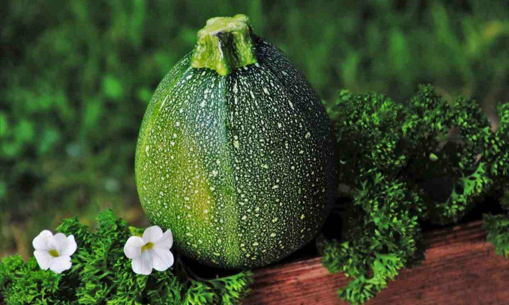 marmellata zucchine