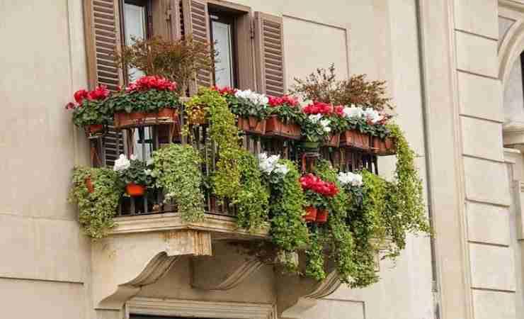 pianta balcone