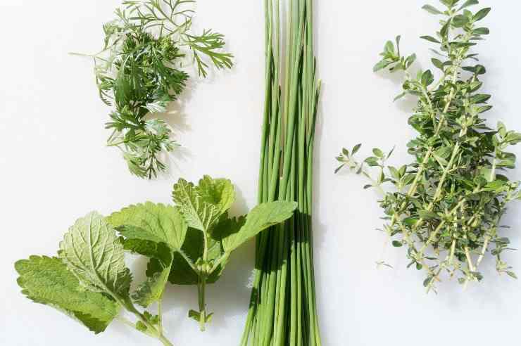 curare piante aromatiche